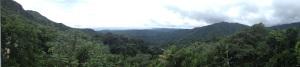Puerto Rico verde